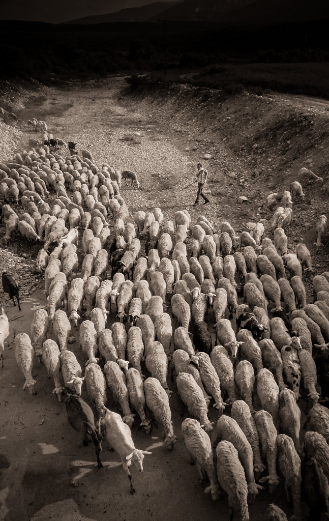 Transhumance , Dion, Mont Olympe, mai 2004